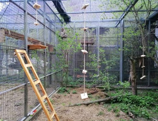 Innenausstattung für das Affengehege