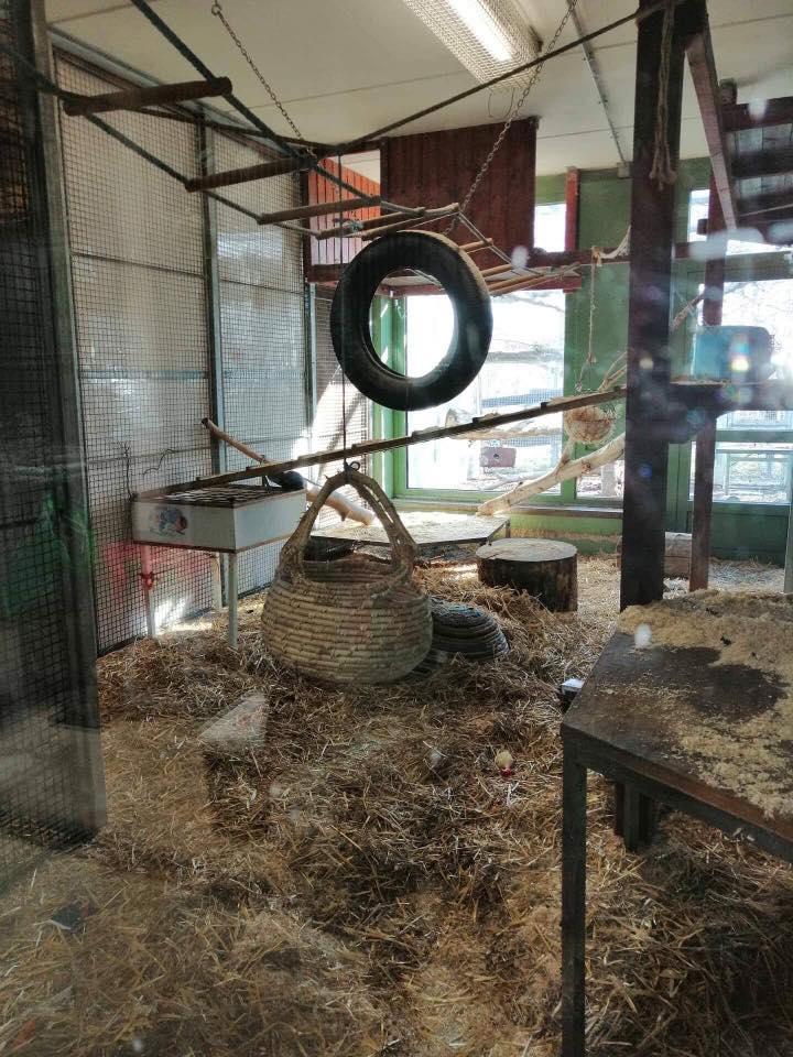 Bau einer Innenausstattung für ein Affengehege über RespekTiere